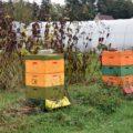 """Fruchtfolge """"Höfe-Tour"""",zwei Bienenstöcke Beeten und Zelten"""